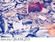 Купить «various raw fresh fish on market counter», фото № 26616213, снято 19 января 2019 г. (c) Яков Филимонов / Фотобанк Лори