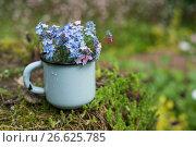 Купить «Summer bouquet», фото № 26625785, снято 24 июня 2017 г. (c) Дарья Богитова / Фотобанк Лори
