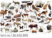 Купить «animal collection asia», фото № 26632805, снято 20 марта 2019 г. (c) Яков Филимонов / Фотобанк Лори