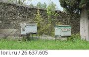 Купить «Beehives in a meadow in monastery», видеоролик № 26637605, снято 18 июня 2017 г. (c) Илья Насакиин / Фотобанк Лори