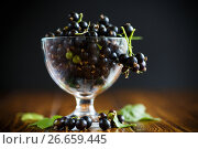 Купить «Black currant in a glass bowl», фото № 26659445, снято 19 июня 2017 г. (c) Peredniankina / Фотобанк Лори