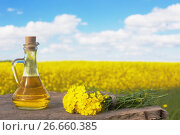 Купить «rapeseed oil (canola) on background field and sky», фото № 26660385, снято 21 мая 2017 г. (c) Майя Крученкова / Фотобанк Лори