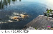 Мальчик и девочка с разбегу прыгают в реку с деревянного пирса, замедленная съемка. Стоковое видео, видеограф Кекяляйнен Андрей / Фотобанк Лори