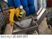 Купить «Worker putting harvested olive in machine», фото № 26669001, снято 22 марта 2017 г. (c) Wavebreak Media / Фотобанк Лори