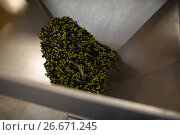 Fresh olive being processed in machine. Стоковое фото, агентство Wavebreak Media / Фотобанк Лори