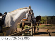 Купить «White horse standing in the ranch», фото № 26672085, снято 28 марта 2017 г. (c) Wavebreak Media / Фотобанк Лори