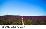Франция, Прованс. Лавандовые поля. (2017 год). Стоковое фото, фотограф Emelinna / Фотобанк Лори