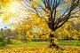 Colorful autumn tree, фото № 26681073, снято 4 октября 2016 г. (c) Sergey Borisov / Фотобанк Лори