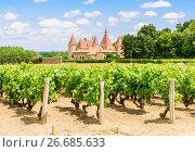 Купить «Vineyard grapevines around the medieval Château de Corcelles-en-Beaujolais, Corcelles-en-Beaujolais, Villefranche-sur-Saône, Rhône, Auvergne-Rhône-Alpes, France.», фото № 26685633, снято 30 июня 2016 г. (c) age Fotostock / Фотобанк Лори