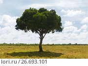 Купить «acacia tree in savannah at africa», фото № 26693101, снято 21 февраля 2017 г. (c) Syda Productions / Фотобанк Лори
