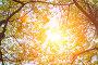 colorful autumn leaves, фото № 26697301, снято 25 июля 2017 г. (c) Сергей Петерман / Фотобанк Лори