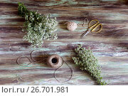 Bundles of freshly cut oregano, ropes and scissors on a wooden table close-up. Стоковое фото, фотограф Татьяна Ляпи / Фотобанк Лори