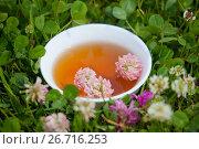 Купить «Травяной напиток с цветами клевера», фото № 26716253, снято 12 июля 2017 г. (c) Татьяна Белова / Фотобанк Лори
