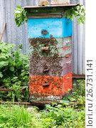 Купить «Honey bees on hive in the garden», фото № 26731141, снято 29 июля 2017 г. (c) Володина Ольга / Фотобанк Лори