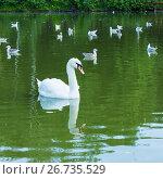 Купить «Лебедь-шипун и молодые крачки на воде пруда», фото № 26735529, снято 12 июля 2017 г. (c) Александр Романов / Фотобанк Лори