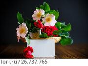 Купить «Bouquet of wild and red rose», фото № 26737765, снято 5 июня 2017 г. (c) Peredniankina / Фотобанк Лори