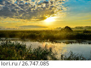 Photo with a summer sunrise and a tree. Стоковое фото, фотограф Олеся Новицкая / Фотобанк Лори