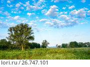 Vintage photo with tree and clouds in summer. Стоковое фото, фотограф Олеся Новицкая / Фотобанк Лори