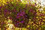 Лобелия (Lobelia) в подвесном горшочке, фото № 26769041, снято 21 августа 2017 г. (c) Марина Володько / Фотобанк Лори