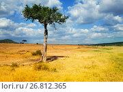 Купить «Acacia tree in foreground of African landscape», фото № 26812365, снято 18 августа 2015 г. (c) Сергей Новиков / Фотобанк Лори