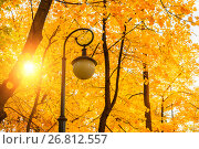 Купить «Autumn park landscape - autumn trees and metal lantern on the background of yellowed autumn leaves», фото № 26812557, снято 3 октября 2016 г. (c) Зезелина Марина / Фотобанк Лори