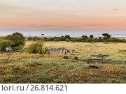 Купить «herd of zebras grazing in savannah at africa», фото № 26814621, снято 18 февраля 2017 г. (c) Syda Productions / Фотобанк Лори