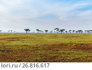Купить «acacia trees in savannah at africa», фото № 26816617, снято 21 февраля 2017 г. (c) Syda Productions / Фотобанк Лори