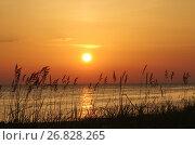 Купить «Закат на Ладожском озере, Карелия», фото № 26828265, снято 12 августа 2017 г. (c) Natalya Sidorova / Фотобанк Лори