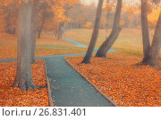 Купить «Autumn landscape. Autumn park alley in the fog with bare autumn trees and orange fallen leaves», фото № 26831401, снято 9 октября 2016 г. (c) Зезелина Марина / Фотобанк Лори