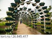 Купить «Цветочный парк в Грозном», фото № 26845417, снято 30 августа 2017 г. (c) Jon Maldini / Фотобанк Лори