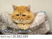Купить «Рыжий кот на лежаке», эксклюзивное фото № 26882689, снято 26 августа 2017 г. (c) Dmitry29 / Фотобанк Лори