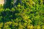 Green dense forest grows on top of a cliff, фото № 26901529, снято 6 ноября 2016 г. (c) Константин Лабунский / Фотобанк Лори