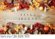 Купить «Autumn background with Hello Autumn letters and autumn nature berries, pumpkins and flowers», фото № 26929101, снято 6 сентября 2017 г. (c) Зезелина Марина / Фотобанк Лори