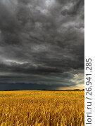Купить «Black thunderstorm cloud above the wheat field», фото № 26941285, снято 14 июля 2017 г. (c) Володина Ольга / Фотобанк Лори