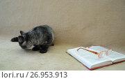 Купить «Gray kitten lies on an open book», видеоролик № 26953913, снято 28 июля 2017 г. (c) Володина Ольга / Фотобанк Лори