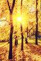 Bright sunny autumn park, фото № 26981861, снято 25 сентября 2017 г. (c) Sergey Borisov / Фотобанк Лори