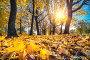 Bright foliage in autumn park, фото № 26981877, снято 5 октября 2016 г. (c) Sergey Borisov / Фотобанк Лори