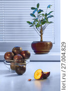 Купить «Large dark plums in a glass plate on a table and a ficus in a ceramic pot on a window sill against the background of a window with a frame from plastic and blinds», фото № 27004829, снято 24 сентября 2017 г. (c) Anatoly Timofeev / Фотобанк Лори