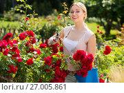 Купить «young female gardener caring roses», фото № 27005861, снято 22 апреля 2019 г. (c) Яков Филимонов / Фотобанк Лори