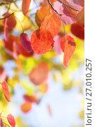 Купить «Осенний фон», фото № 27010257, снято 23 сентября 2016 г. (c) Икан Леонид / Фотобанк Лори