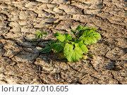 Купить «Земля с трещинами и растениями», эксклюзивное фото № 27010605, снято 20 сентября 2017 г. (c) Андрей Дегтярёв / Фотобанк Лори