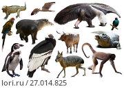 Купить «Fauna of South America isolated», фото № 27014825, снято 12 декабря 2018 г. (c) Яков Филимонов / Фотобанк Лори