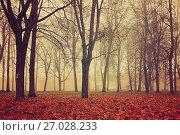Купить «Autumn park in dense fog. Autumn foggy landscape with bare autumn trees», фото № 27028233, снято 20 июня 2019 г. (c) Зезелина Марина / Фотобанк Лори