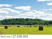 Купить «Сельский пейзаж. Скошенное поле с рулонами сена», эксклюзивное фото № 27038993, снято 17 августа 2017 г. (c) Макаров Алексей / Фотобанк Лори