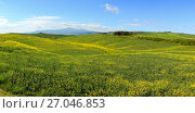 Купить «Tuscany hills with flowers on green fields», фото № 27046853, снято 4 мая 2017 г. (c) Михаил Коханчиков / Фотобанк Лори