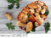 Купить «organic Boletus mushrooms in wicker basket», фото № 27055117, снято 13 сентября 2017 г. (c) Oksana Zh / Фотобанк Лори