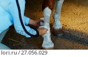 Купить «Veterinarian doctor bandaging horse leg 4k», видеоролик № 27056029, снято 24 января 2020 г. (c) Wavebreak Media / Фотобанк Лори