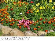 Купить «Цветы на клумбе в саду», эксклюзивное фото № 27092117, снято 20 августа 2017 г. (c) Елена Коромыслова / Фотобанк Лори
