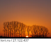 Купить «Line of Black poplar trees  (Populus nigra) at sunset, Surfontaine, Picardy, France.», фото № 27122437, снято 11 декабря 2017 г. (c) Nature Picture Library / Фотобанк Лори