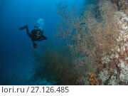 Купить «Female scuba diver swim near coral reef», фото № 27126485, снято 6 сентября 2017 г. (c) Некрасов Андрей / Фотобанк Лори